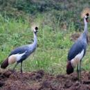 22 DAY BUDGET BIRDING SAFARI