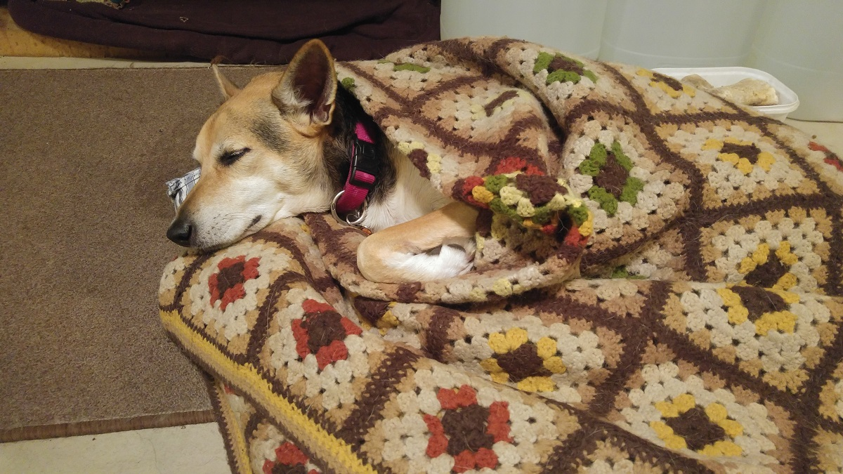 Shiloh in a blanket