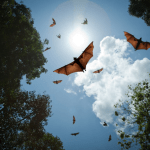 Keep bugs out of your house: bats will also consume insects