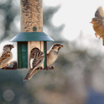 Keep bugs out of your house: many birds eat insects