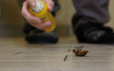 10 Tips to Keep Bugs Out of Your House