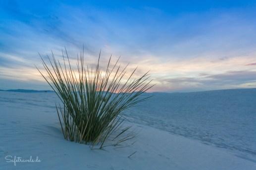 White Sands Flora