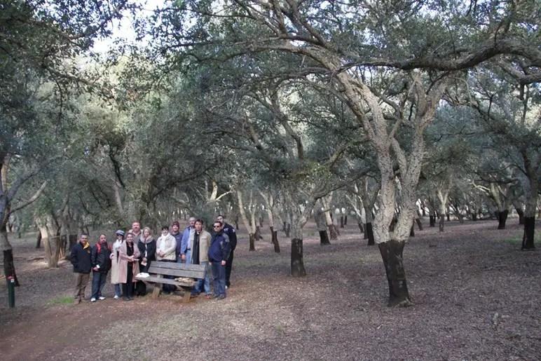 cork plantation