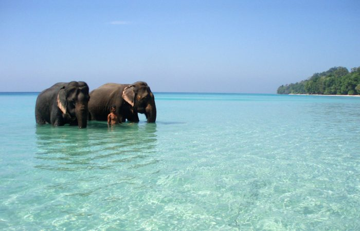 Andaman Tour Packages with Saffron Holidays scaled