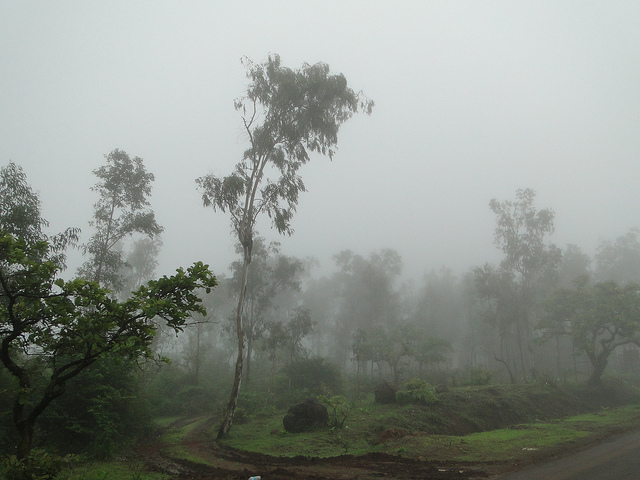 Mahabaleshwar forest trails. Photo credit Ankur P, CC BY SA-2.0
