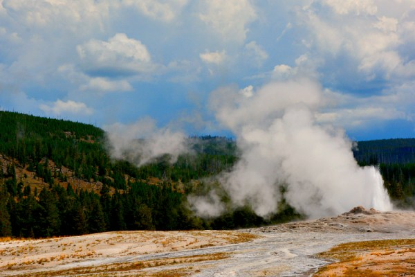 geyser yellowstone park usa