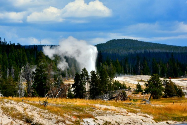 grand geyser yellowstone park usa