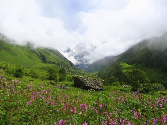 valley of flowers monsoon