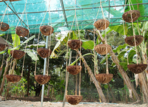 Hanging plant holders are another option.
