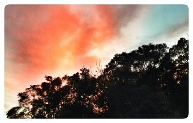 not a bush fire, fire tree 1