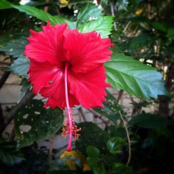 bloom boldly