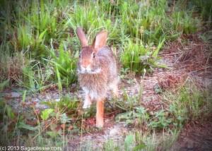 Bunny Hare Win Lose