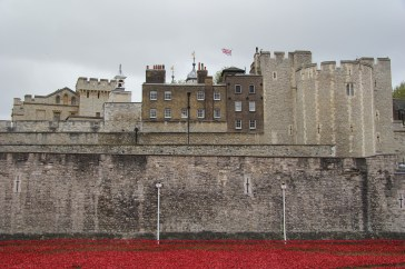 remembrance-day-poppies-1