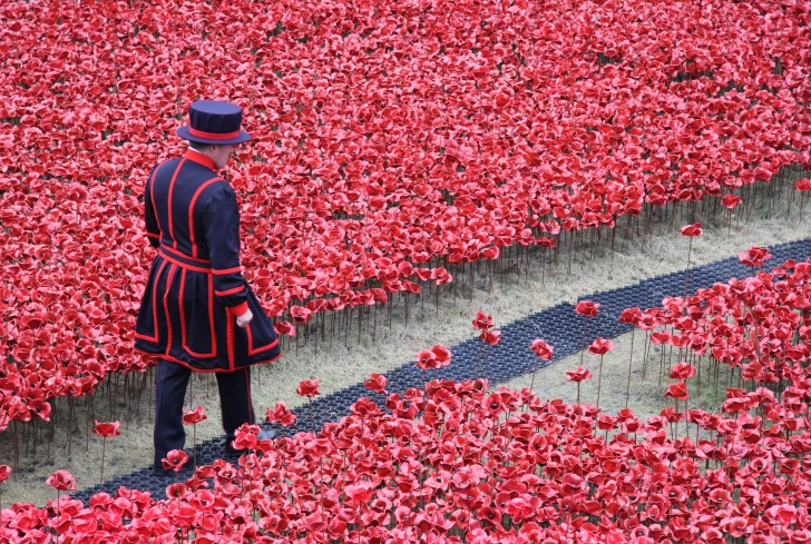 remembrance-day-poppies-4