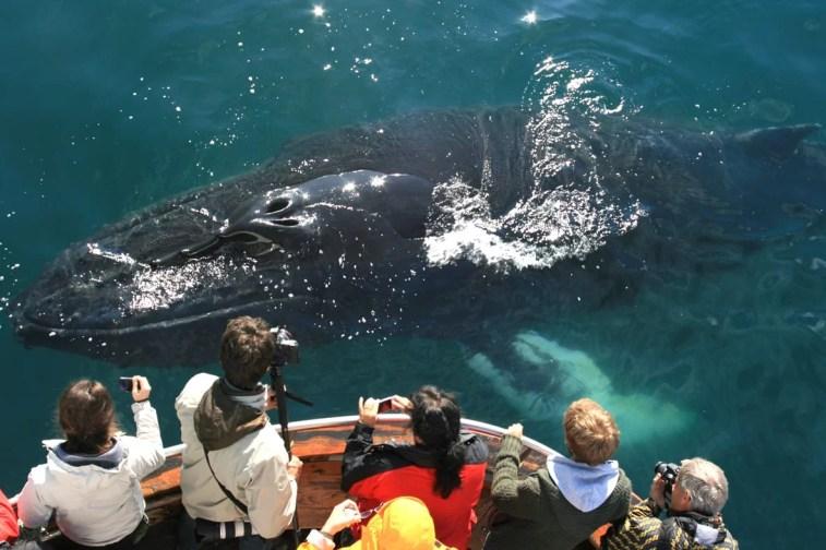 Whale Watching in Húsavík