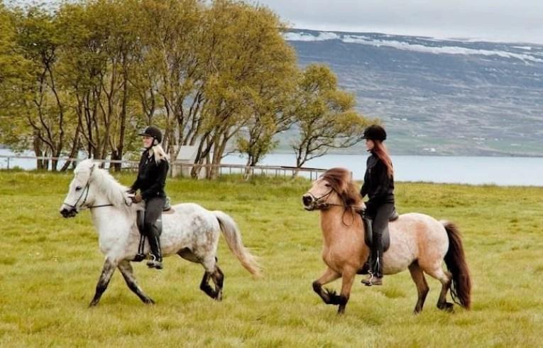 Horses & People
