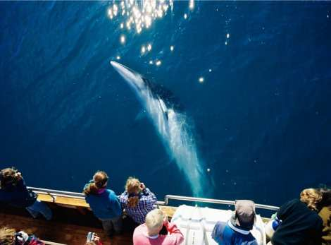 Original Whalewatching Húsavík