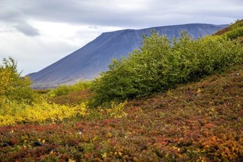 Autumn colors in Lake Mývatn Lava.