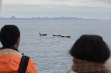 Dolphins-Whale Safari