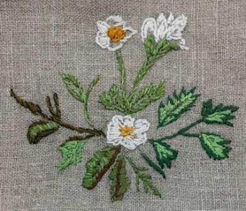 41vit-blomma