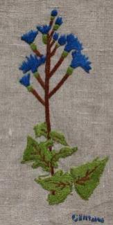 Fjälltolta Fjälltolta (Lactuca alpina) blir 1 – 1,5 m hög och växer i skuggiga, fuktiga fjälldalar.