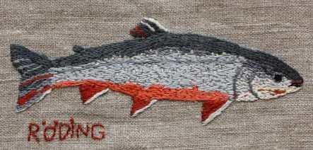 Röding Fjällröding (Salvelinus alpinus), Lapplands landskapsfisk och Sveriges mest utpräglade kallvattenfisk. Den har sin största förekomst i fjälltrakternas sjöar och vattendrag, Rödingen är viktig för både fritids- och yrkesfisket, Under senare år har konsumtionsodling av röding ökat.
