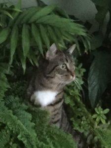 Max, the cat
