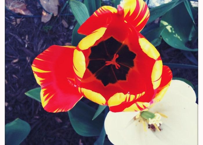 Garden Mid-April