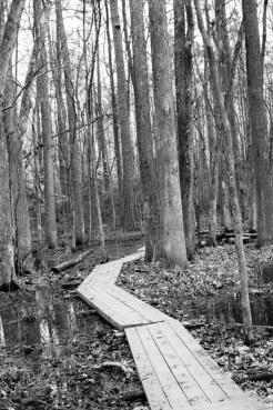 the wetlands (11 of 21)