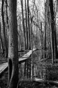 the wetlands (4 of 21)