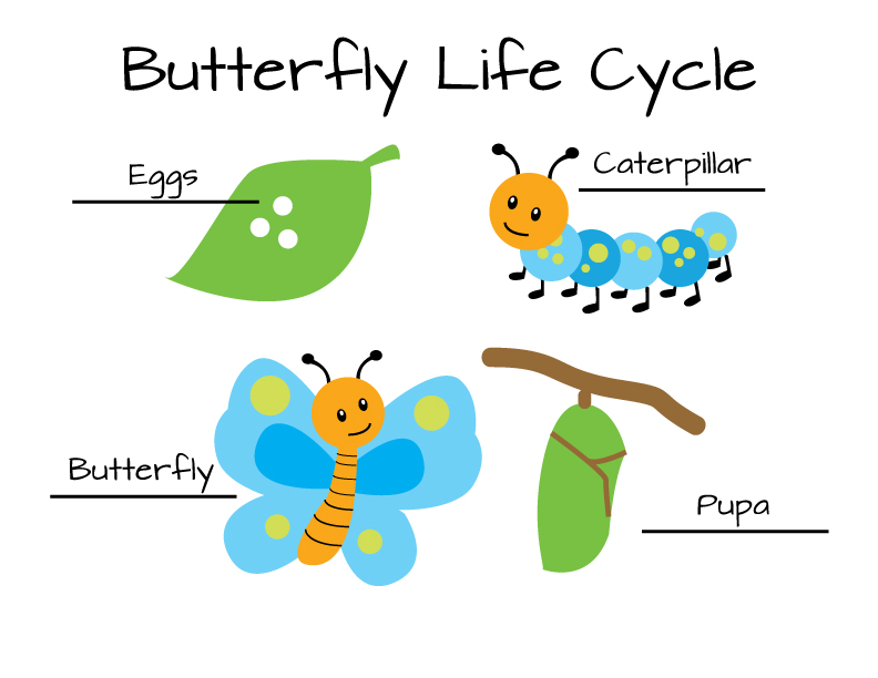 Butterfly Life Cycle Free Dowload
