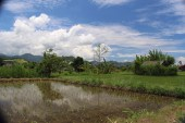 Rice fields and mountains.