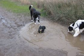 Cooling down in the nearest mud-hole