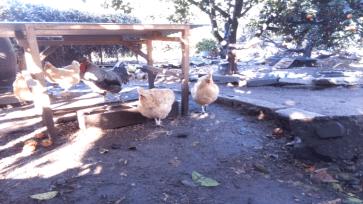 New chickencam photo