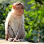 猿が自閉症でとる行動って?アスペ治療や脳は人間の大人とどう違う?