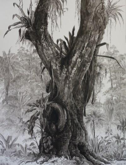 François Houtin - Rio - étude n°12 - Casa Burle Marx