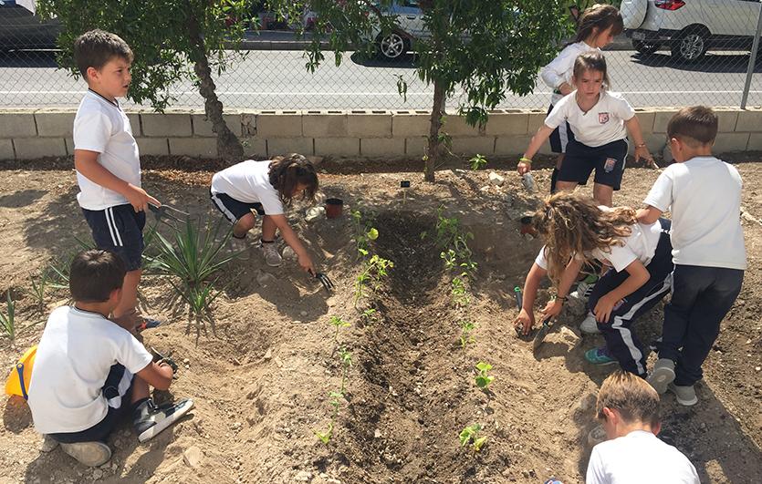 Ecohuerto-Colegio-Sagrada-Familia-de-Elda