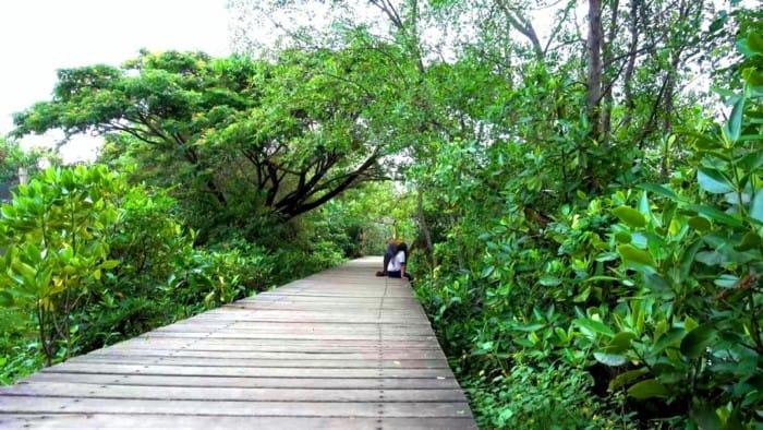 Fungsi Ekologis Hutan Mangrove