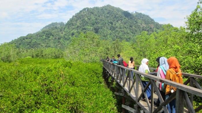 Gambar Hutan Mangrove