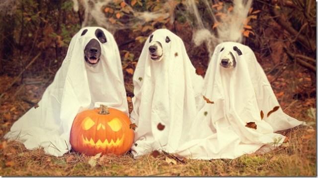 halloween-2870607_1920 (1)