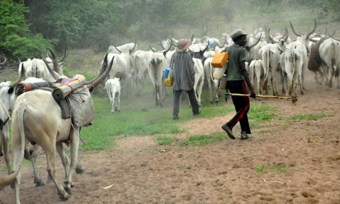File Photo: Herdsmen.