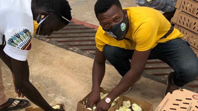 Nigéria : un ancien banquier se reconvertit en éleveur de volailles