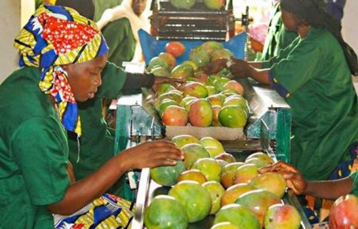 Mali : croissance économique comme gage de stabilité politique et sociale