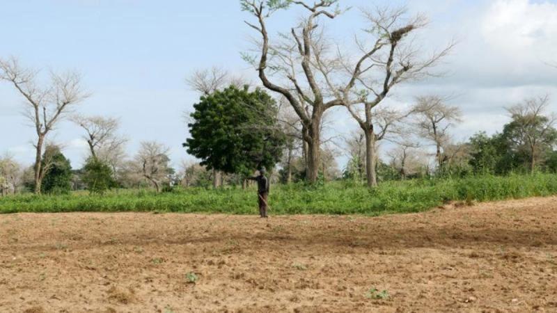 Sénégal: un nouveau plan d'adaptation pour une agriculture résiliente