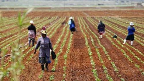 Ramaphosa makes land acquisition easy for women