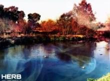 Download Album: VA - Herb Back, Vol. 2