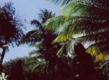 Remy Banks - The Phantom Of Paradise