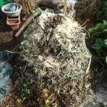 グリーン堆肥づくり:No.9堆肥の仕込み(2)