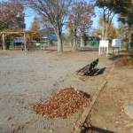 落葉堆肥づくり:落葉かき(9回目)