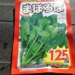 ホウレン草(6):播種
